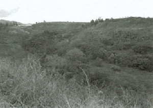What remains of Camp Honouliuili today is hidden in the overgrowth.