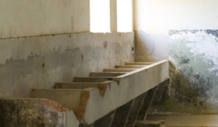 trough of sinks along one wall