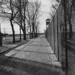 view along fence to guard tower in the distance; row of trees to left